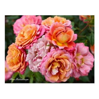 Rosa Kaleidoscope [Postcard] ポストカード