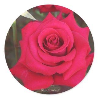 Rosa Kardinal Classic Round Sticker