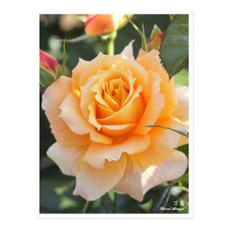Rosa'Manyo'(万葉) ポストカード