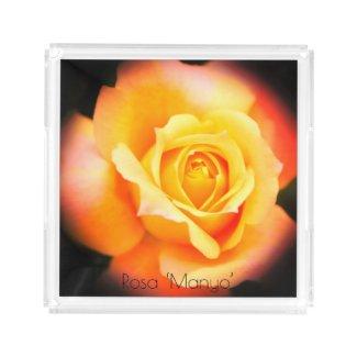 Rosa 'Manyo':Acrylic Tray アクリルトレー