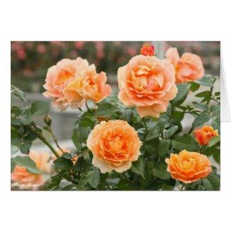 Rosa'Manyo':Greeting card