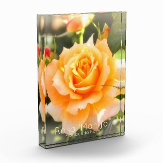 Rosa 'Manyo':Photo Block フォトブロック