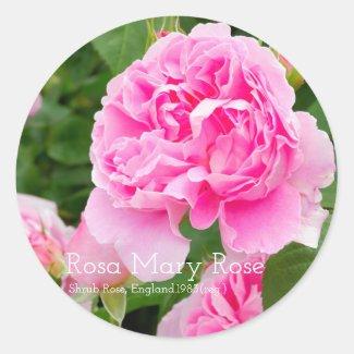 Rosa Mary Rose [Round Seal] ラウンドシール