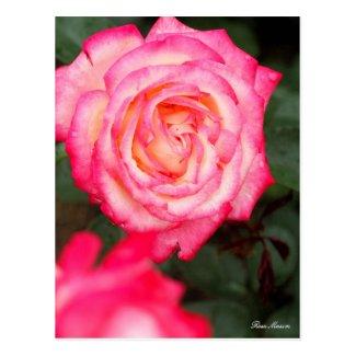 Rosa Maxim:Postcard ポストカード