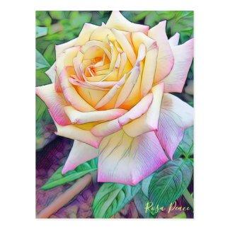 Rosa Peace [Postcard] ポストカード
