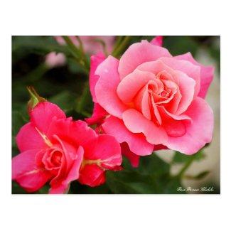 Rosa Princess Chichibu:Postcard ポストカード