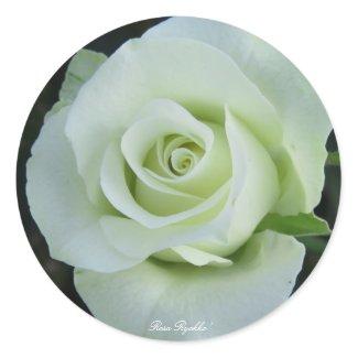 Rosa'Ryokko'(=Green light)緑光 Classic Round Sticker