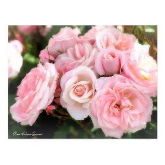 Rosa Sakura-Gasumi:Postcard ポストカード