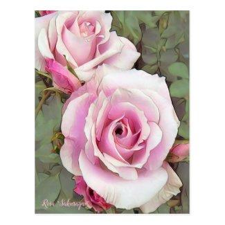"""Rosa """"Sakuragai"""" [Postcard] ポストカード"""
