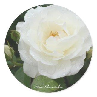Rosa Schneewittchen Classic Round Sticker