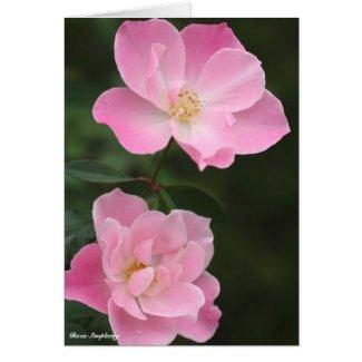 Rosa Simplicity:Greeting card