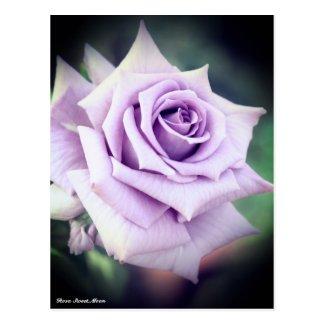 Rosa Sweet Moon ポストカード