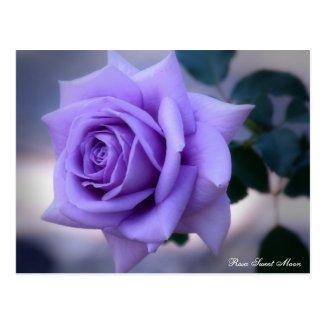 Rosa Sweet Moon:Postcard ポストカード