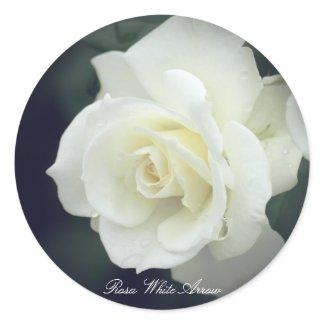 Rosa White Arrow ラウンドシール