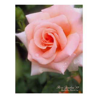 Rosa Zambra '93:Premium canvas poster ポスター