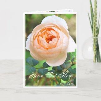 Rose Garden Scenery:Nakanoshima_01 [Greeting Card] カード