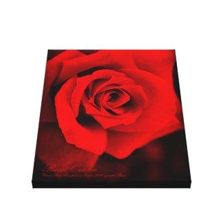 Rose Osaka:Premium Canvas キャンバスプリント