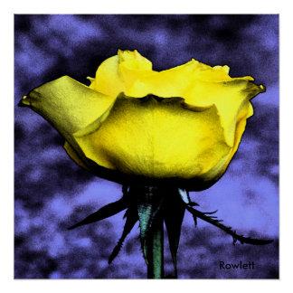 Rowlettコンテンポラリーなデジタルの写真の黄色バラ ポスター