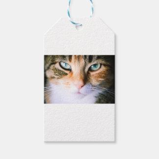 Roxie猫 ギフトタグ