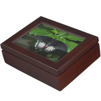 Rumanzoviaのアゲハチョウ-男性 ジュエリーボックス