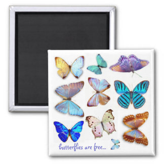 S Ambroseによる真珠色の蝶磁石 マグネット