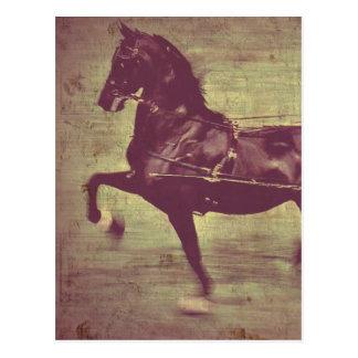 Saddlebredの歌 ポストカード