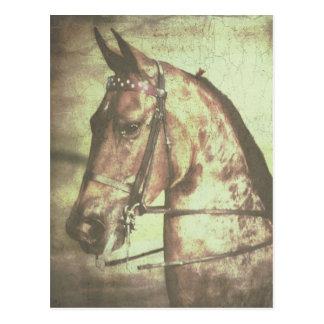 Saddlebredの馬 ポストカード