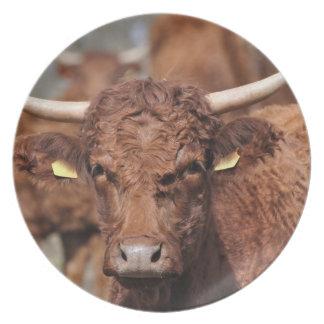 Salersの茶色の角状牛 プレート