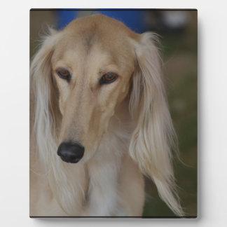 Salukiブロンドの犬 フォトプラーク
