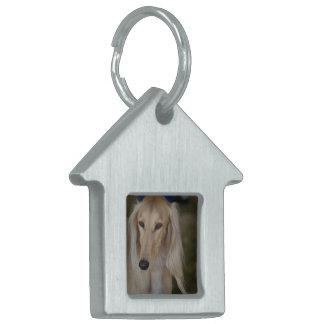 Salukiブロンドの犬 ペットネームタグ