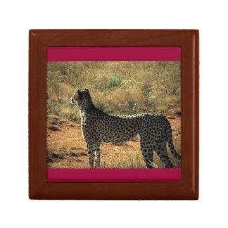 Samburuのチータ ギフトボックス