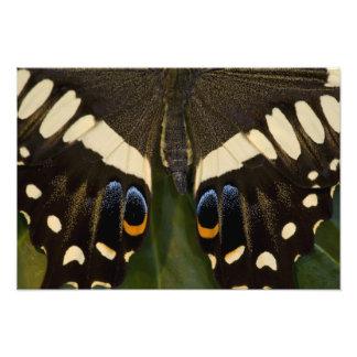 Sammamishのワシントン州の熱帯蝶17 フォトプリント