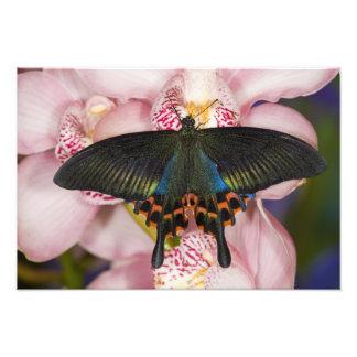 Sammamishのワシントン州の熱帯蝶3 フォトプリント