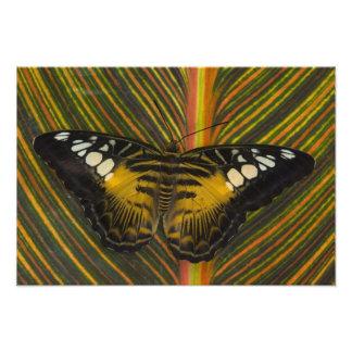 Sammamishのワシントン州の熱帯蝶40 フォトプリント
