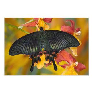 Sammamishのワシントン州の熱帯蝶4 フォトプリント