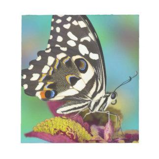Sammamishのワシントン州の熱帯蝶5 ノートパッド