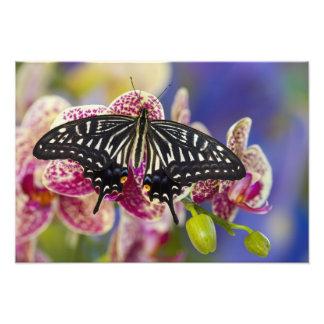 Sammamishのワシントン州の熱帯蝶5 フォトプリント