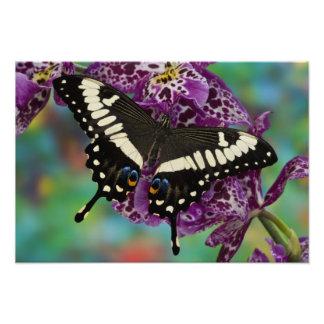 Sammamishのワシントン州の熱帯蝶6 フォトプリント