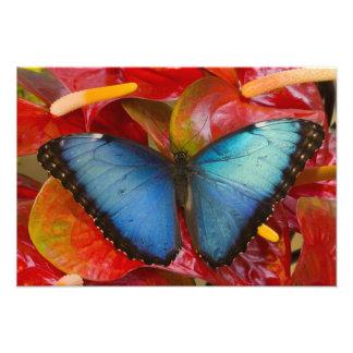 Sammamishワシントン州の熱帯蝶10 フォトプリント