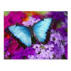 Sammamishワシントン州の熱帯蝶7 ポストカード
