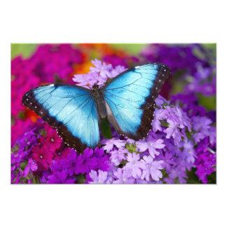 Sammamishワシントン州の熱帯蝶9 フォトプリント