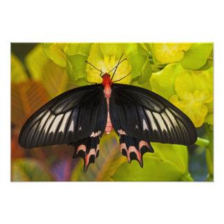 Sammamish、ワシントン州。 熱帯蝶14 フォトプリント