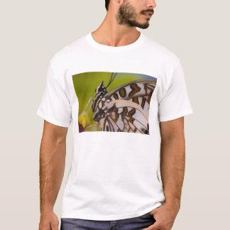 Sammamish、ワシントン州。 熱帯蝶23 tシャツ