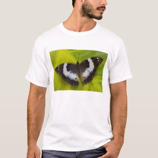 Sammamish、ワシントン州。 熱帯蝶29 tシャツ
