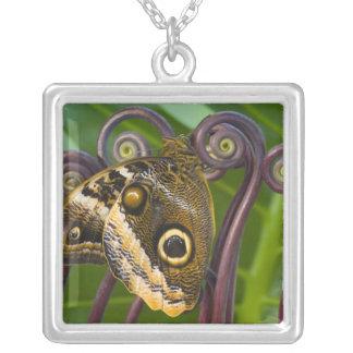 Sammamish、ワシントン州。 熱帯蝶31 シルバープレートネックレス