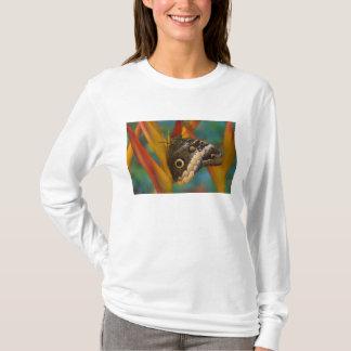 Sammamish、ワシントン州。 熱帯蝶33 tシャツ