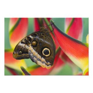 Sammamish、ワシントン州。 熱帯蝶36 フォトプリント