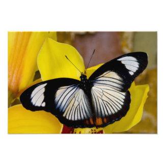 Sammamish、ワシントン州。 熱帯蝶37 フォトプリント