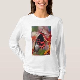 Sammamish、ワシントン州。 熱帯蝶3 tシャツ