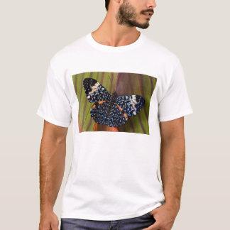 Sammamish、ワシントン州。 熱帯蝶54 tシャツ